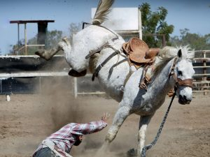 Skador inom hästsporten