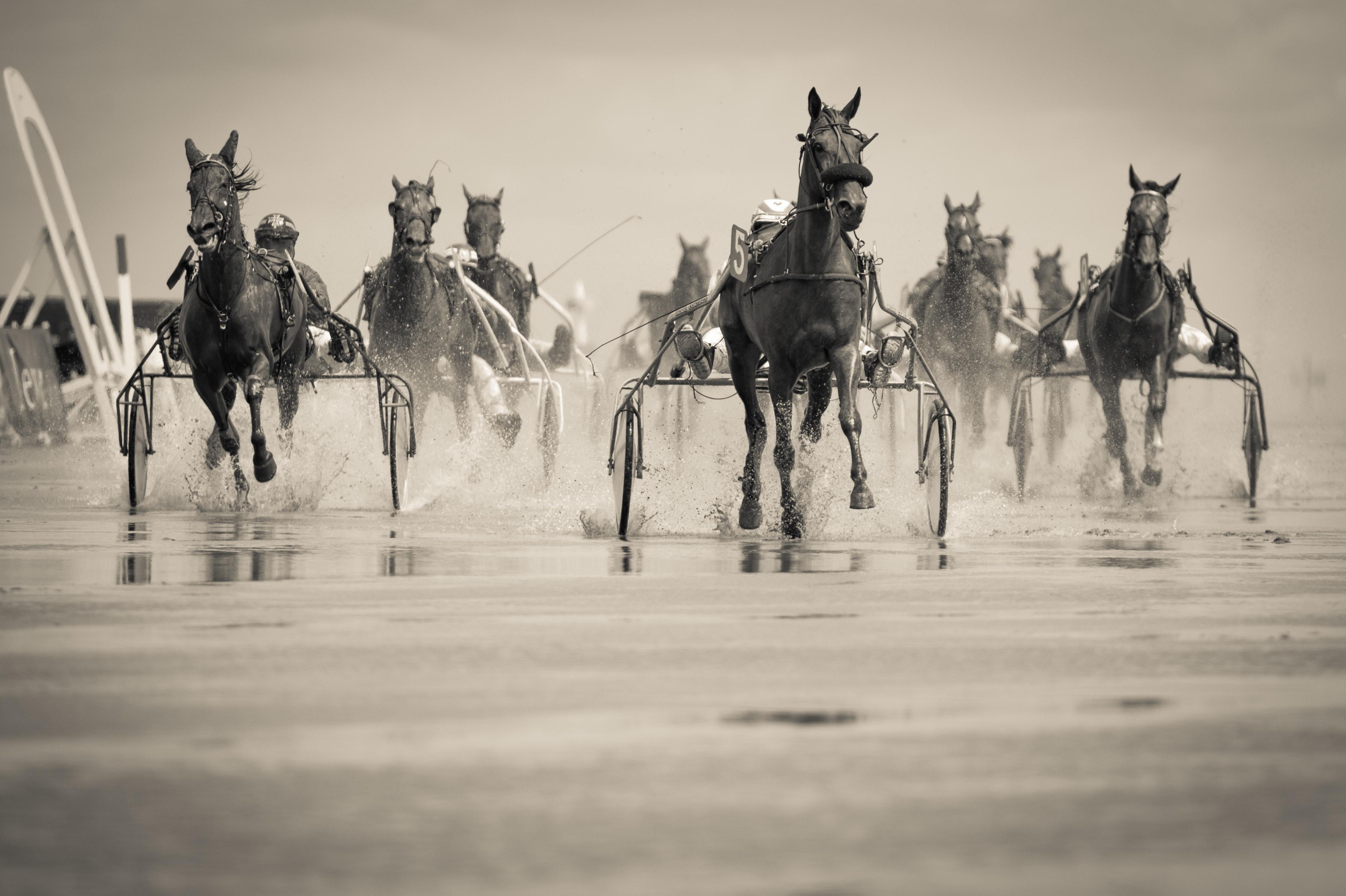 Hästar som travar