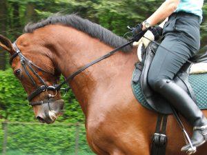 Viktigt med rätt skodon inom hästsport